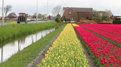 Irrigation and Drainage Canal Beside Flowering Dutch Bulbfields Stock Footage