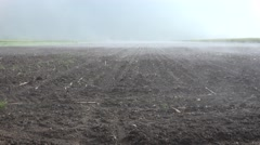 4K Fog in Agriculture Field, Vapor, Fume, Steam on Colza, Rape Cultivated Land - stock footage