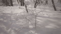 Frozen bush in the snow-covered forest. Vignette color - stock footage