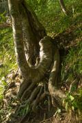 Roots of the tree - stock photo