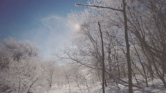 The wind picks up snowflakes on the air in the forest. Vignette color - stock footage