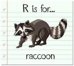 Flashcard letter R is for raccoon - stock illustration