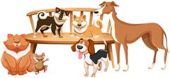 Dogs and cat on the wooden chair - stock illustration