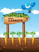 Farm with fresh carrots and sign - stock illustration