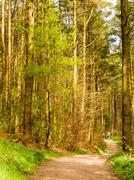 Woodland walk at Ceacon Fell Country Park, Lancashire, UK - stock photo