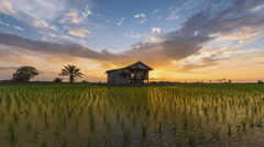 Time lapse of a sunset view at a lonely house in the middle of a secluded paddy - stock footage