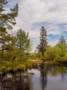 The main Tarn Area at beacon Fell Country Park, Lancashire, UK - stock photo