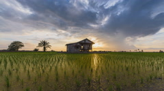 Pan Time lapse sunset view of a lonely house in the middle of a secluded paddy Stock Footage