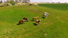 Deep flight over horses on green pasture - Aerial view Stock Footage