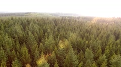 Aerial view - fly Shot Over The North European Forest Stock Footage