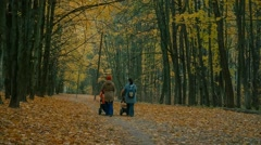 Thinning yellow leaves in autumn forest Stock Footage