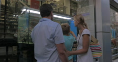 Family watching aquarium in shop show-window Stock Footage