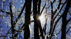 Shiny snowflakes falling among the snow-covered branches of trees in the rays Stock Footage