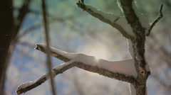 The wind picks up snowflakes from snow-covered branches under the bright rays - stock footage