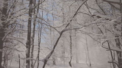 The breeze rustles among the frozen trees, basking in the sun. Vignette color Stock Footage