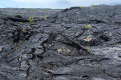Lava Field on Big Island of Hawaii - stock photo