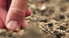 Farmer planting corn seed in fertile arable land Stock Footage