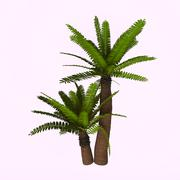 River Cycad Plants - stock illustration