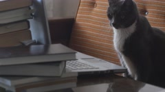 Smart cat among books watching interesting movie on computer Stock Footage