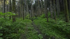 Walking through pine tree forest towards the fallen tree Stock Footage