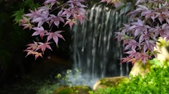 4K Japanese Maple leafs with water fall in background  Stock Footage