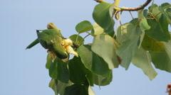 Medium low angle panning shot of bird perching in tree / Playa Hernadez, Punta Stock Footage