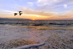 Ocean Sunset Birds Silhouette - stock photo
