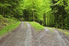 Forked Forest Road in Spring, Miltenberg, Miltenberg-District, Churfranken, Stock Photos