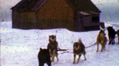 1957: Eager sled dogs ready winter snowscape cloudy journey ahead. Stock Footage