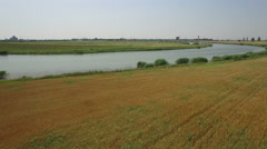 Aerial view over river next to wheat field at countryside. Stock Footage