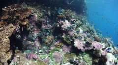 Fish Feeding on Eggs on Coral Reef Stock Footage