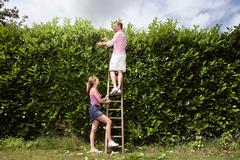 Couple trimming foliage - stock photo