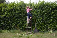 Women on ladder trimming hedge - stock photo