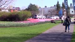Ottawa, Canada Tulip Festival Stock Footage