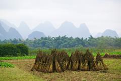Rice field yangshuo Stock Photos