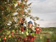 Ecologist Inspecting Tree Stock Photos