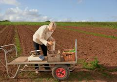 Farm worker assesses crops Stock Photos