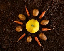 organic vegetable still life - stock photo
