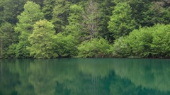 Forest lake. Water reflection. Camera panning. - stock footage