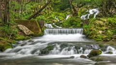 Forest waterfalls. Easy zoom out. - stock footage