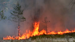 Forest fire destroys the trees of wild forest. - stock footage