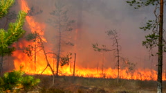 Forest fire destroys the nature of the wild. Stock Footage