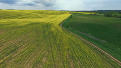 Field with blooming Canola, during spring, rape, green field  Aerial view Stock Footage