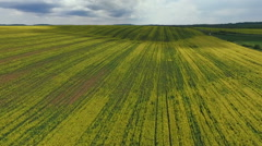 Farmland with blooming Canola, Rape, Spring, Aerial view - stock footage