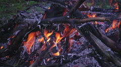 Fire in nature Stock Footage