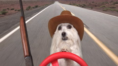Dog Cowboy Drives Rifle By His Side Old Western  Effect - stock footage