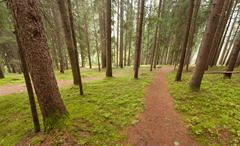 A single alpine path splits in two different directions. It's an autumnal clo Stock Photos