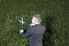 Businessman trimming hedge Stock Photos