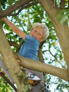Boy, 7 playing in tree Stock Photos