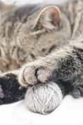 Tired tabby cat with ball of yarn - stock photo